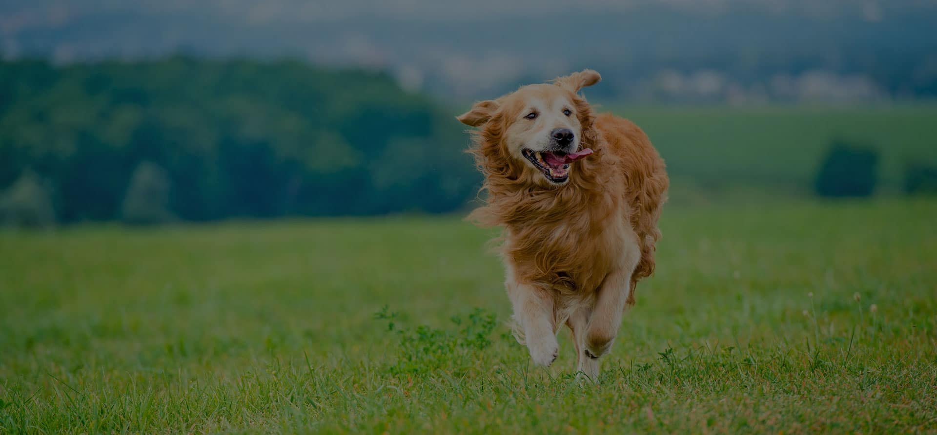 Copyright: gekaskr 123RF Stock Photo dog running