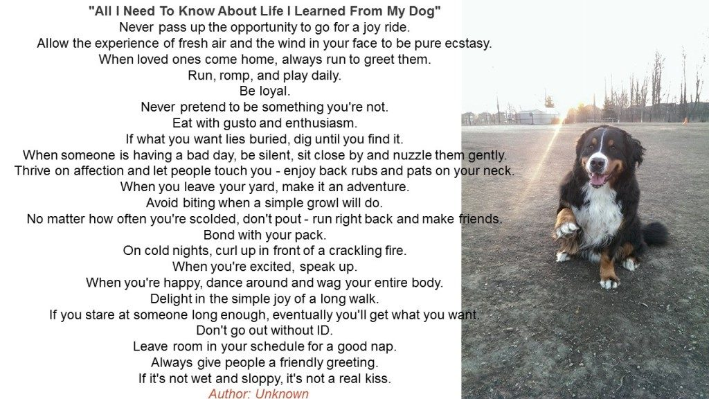 Poem - All I Need to Know About Life