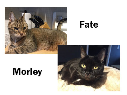 Cats: fate & Morley, Owner: Penny