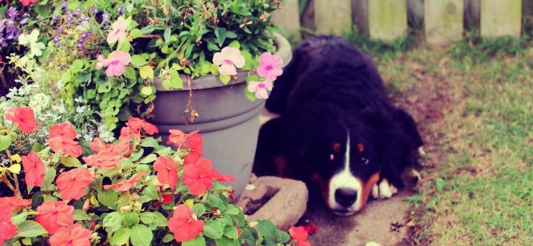 Photo Tips for Pets