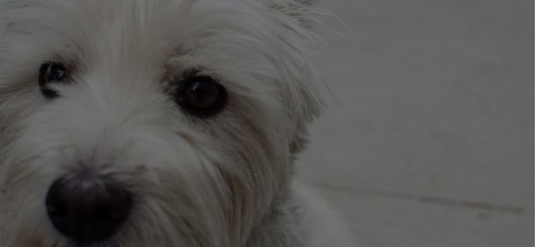 Pet Pain Awareness
