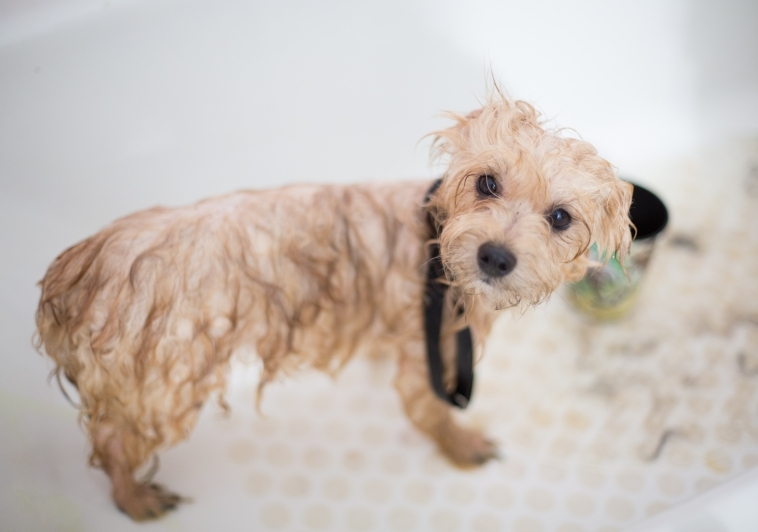 Goodbye Messy Mutts – Dog Cleaning Made Easy!