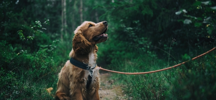 "Training Your Dog: The ""Pawsitives"" of Positive Reinforcement"