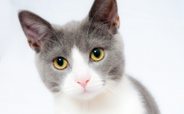 Feline Body Language: What Is Your Cat Telling You?
