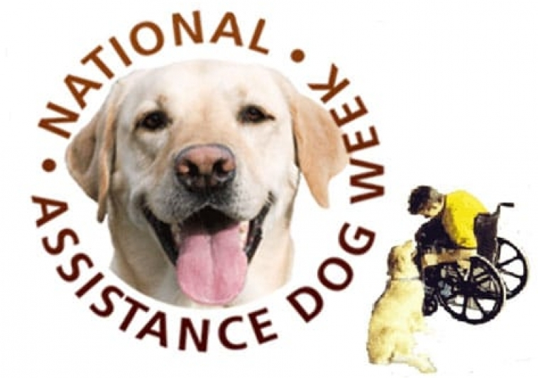 International Assistance Dog Week: August 5-11