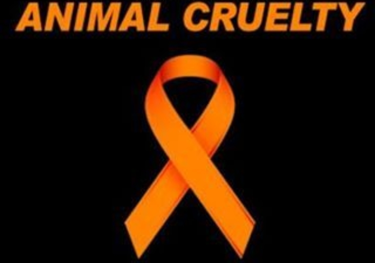 April is Prevention to Animal Cruelty Month