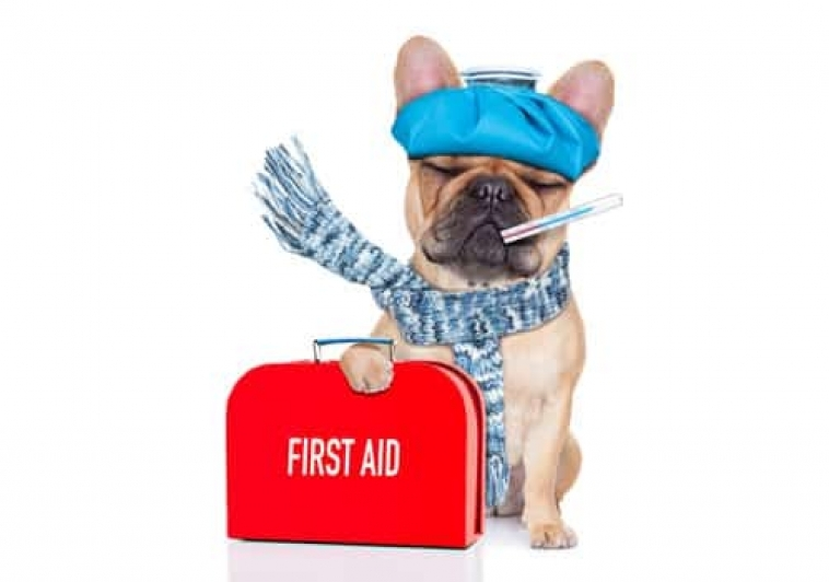 Homemade Canine First Aid Kit