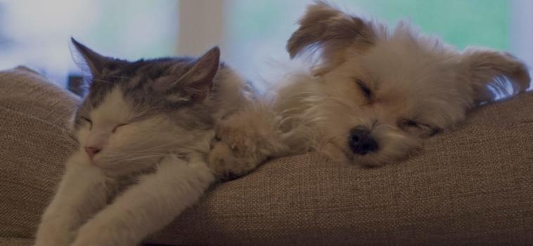 Do Pets Enjoy the Radio Turned On?