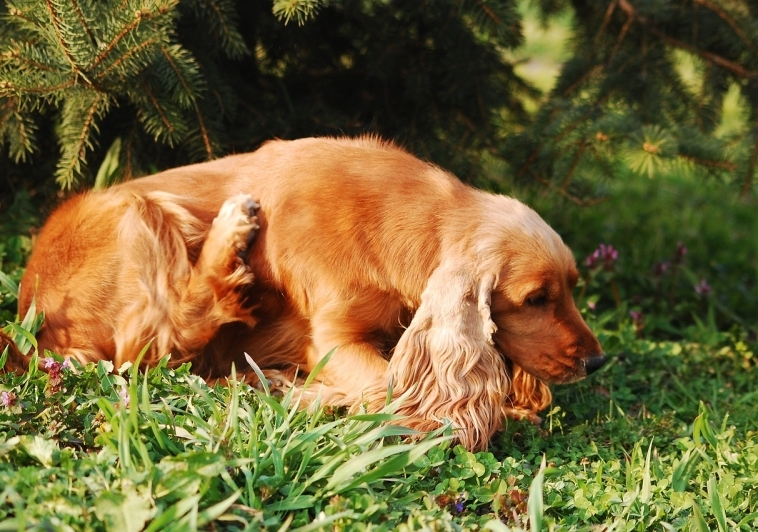 Help Your Pup Fight Allergy Season Naturally!