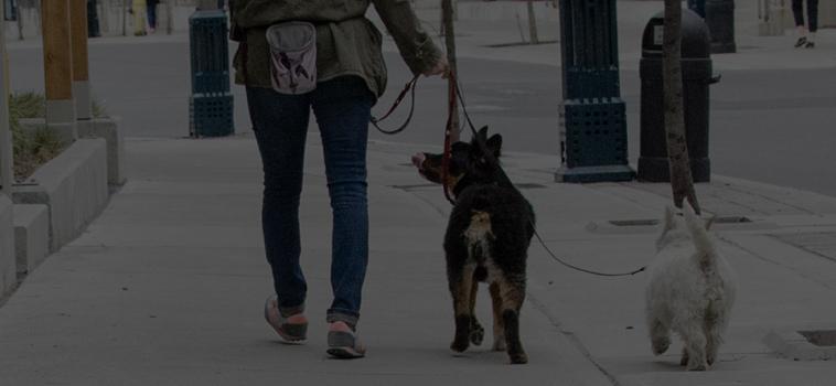 Walking Dogs in the Rain