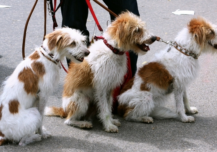 How To Find A Dog Walker/Pet Sitter