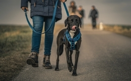 Harness 101: Top Product Picks + Leash & Harness Safety