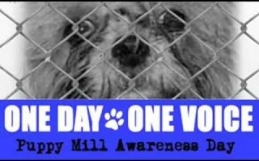 Puppy Mill Awareness