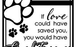 Pet Memorial Day – Sunday, September 9th