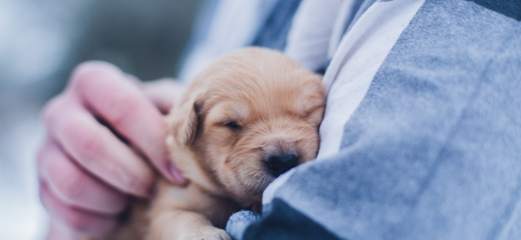 New Puppy Checklist – What You'll Actually Need