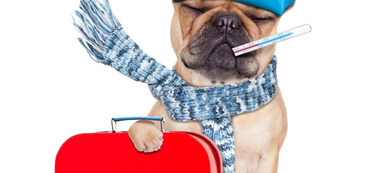 5 Things You Need to Know About Pet First Aid