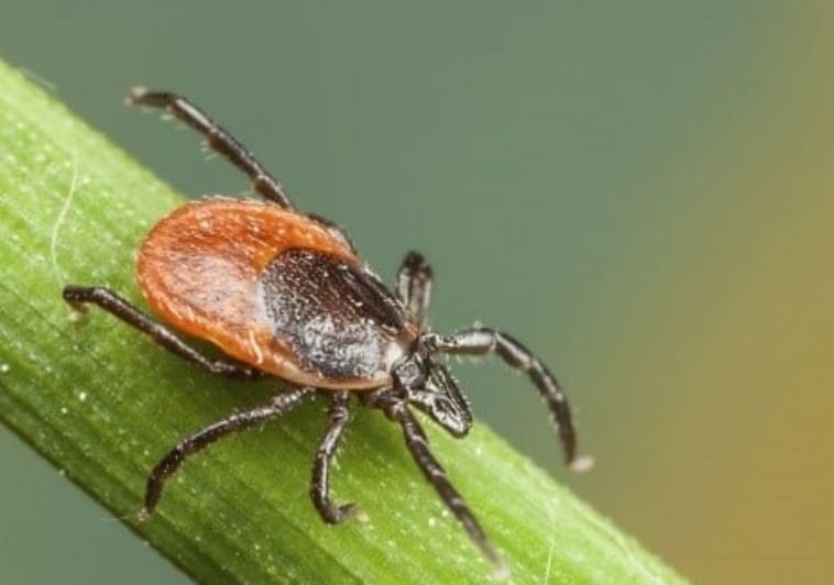 What's Up With Ticks This Year?
